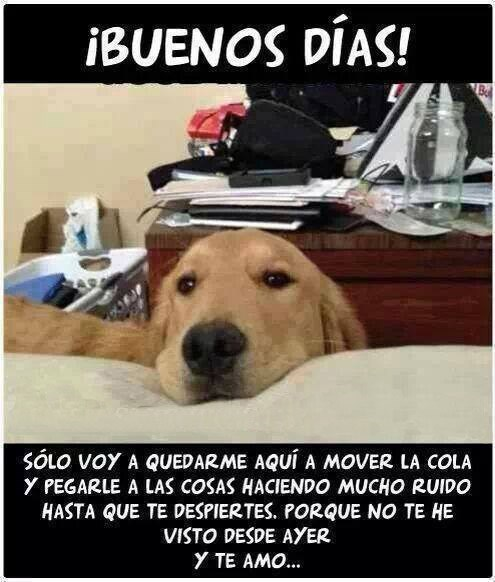 bromas perros Memes animales - 8188189440