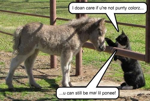 ponies horses Cats