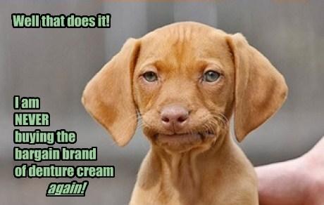 dentures dogs puppies - 8188878080