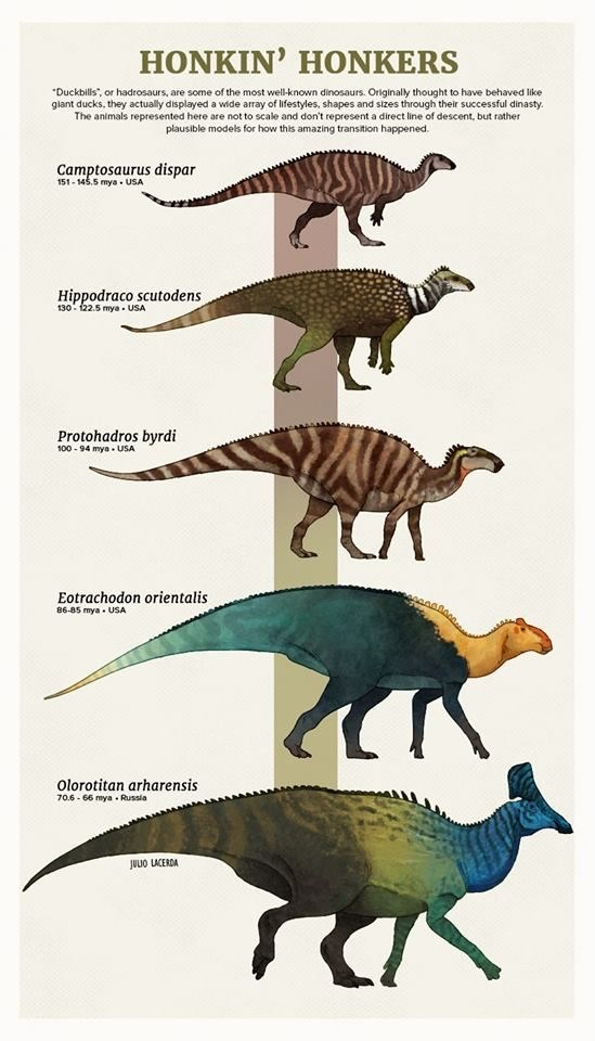art evolution tumblr paleoart species animals - 8188933
