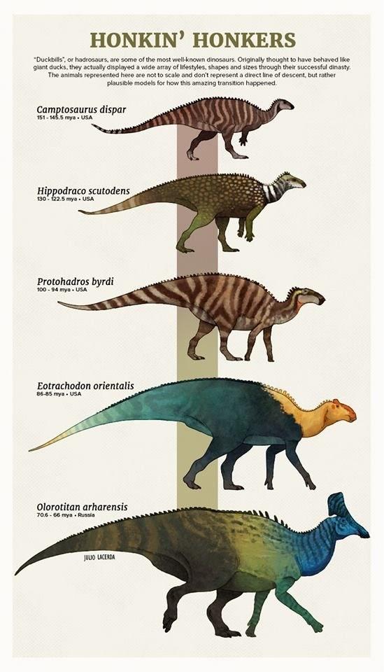 evolution animals tumblr