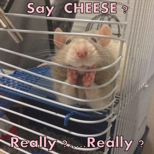 cheese mice mouse - 8189122048