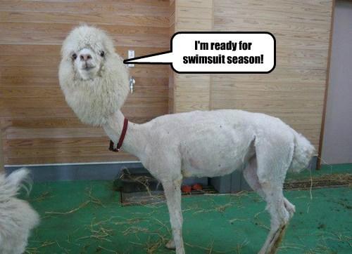 alpaca summer llamas swimsuits - 8189259520