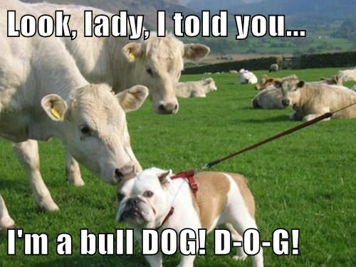 Look, lady, I told you... I'm a bull DOG! D-O-G!