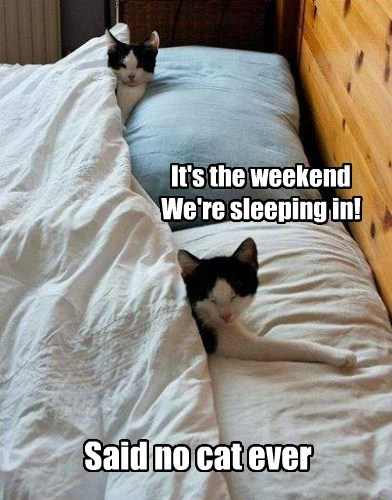 weekends Caturday - 8189833472