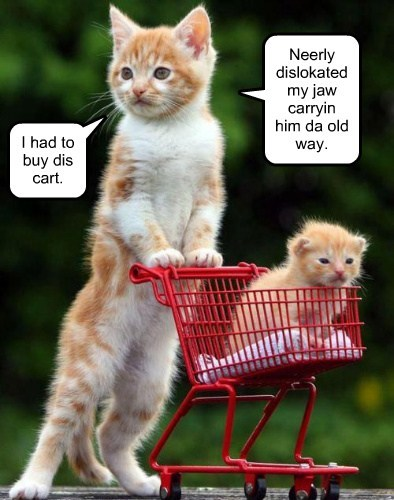 kitten shopping cart Cats - 8189878272