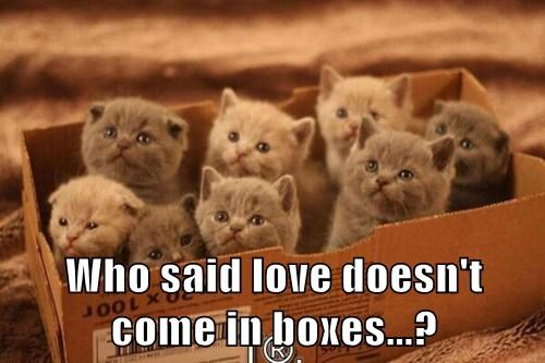 kitten,boxes,love