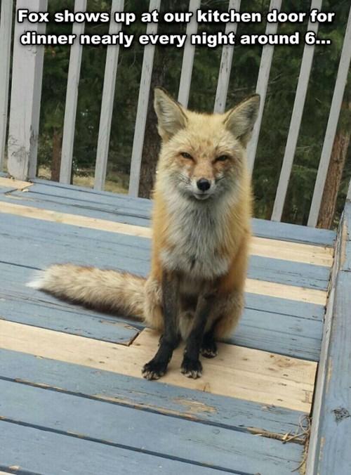 fox,dinner