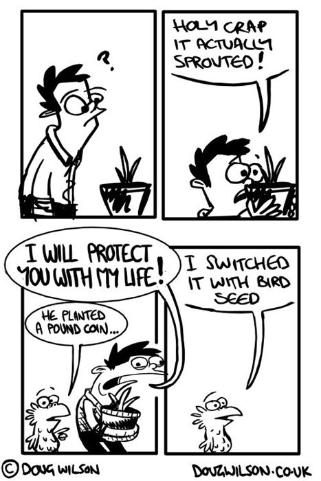 seeds,birds,pranks,web comics