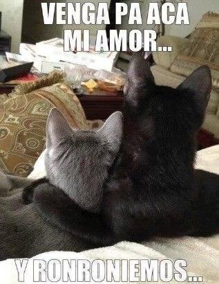 gatos bromas Memes animales - 8190138368