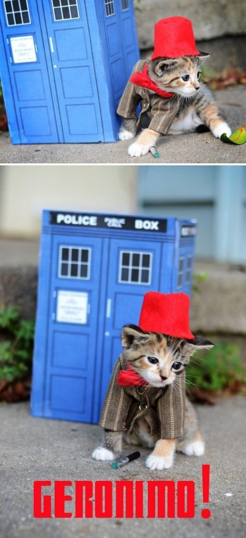 cosplay kitten 11th Doctor