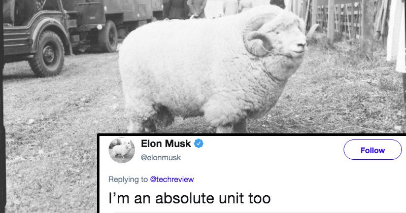 twitter elon musk social media ridiculous funny - 8190469
