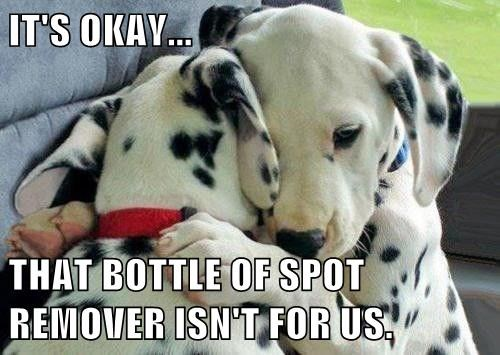 IT'S OKAY... THAT BOTTLE OF SPOT REMOVER ISN'T FOR US.