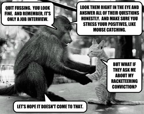 monkey job interview Cats - 8191760896