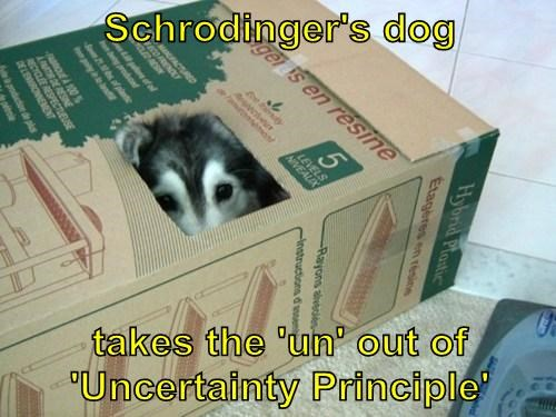 dogs,schrodingers-cat