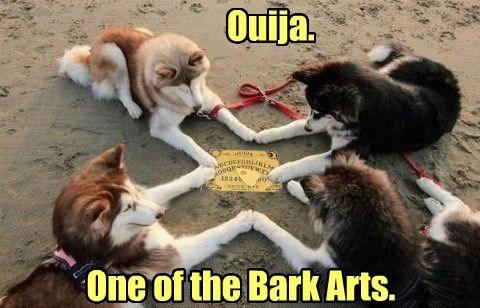 dogs ouija puns - 8192381696