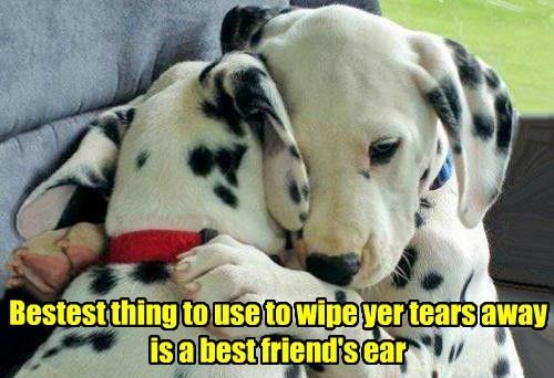 puppies dalmatians crying - 8192428544
