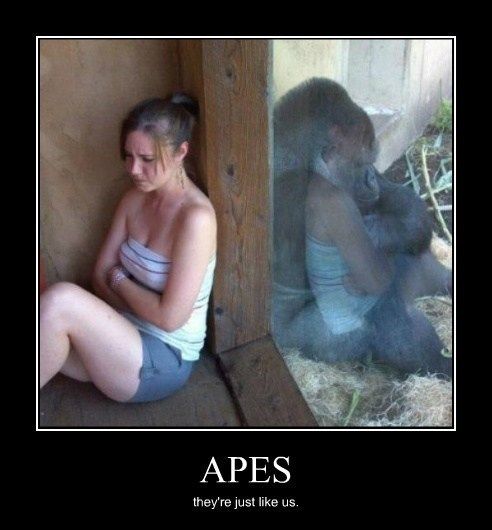 angry apes humans funny - 8192570880