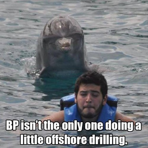 bp dolphins oil - 8192662272