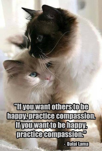 """If you want others to be happy, practice compassion. If you want to be happy, practice compassion."" - Dalai Lama"