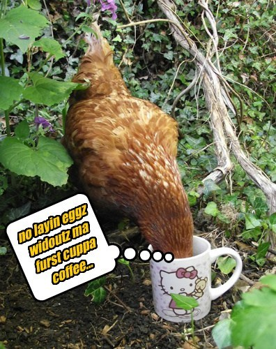 mornings eggs hens coffee chickens - 8193002240