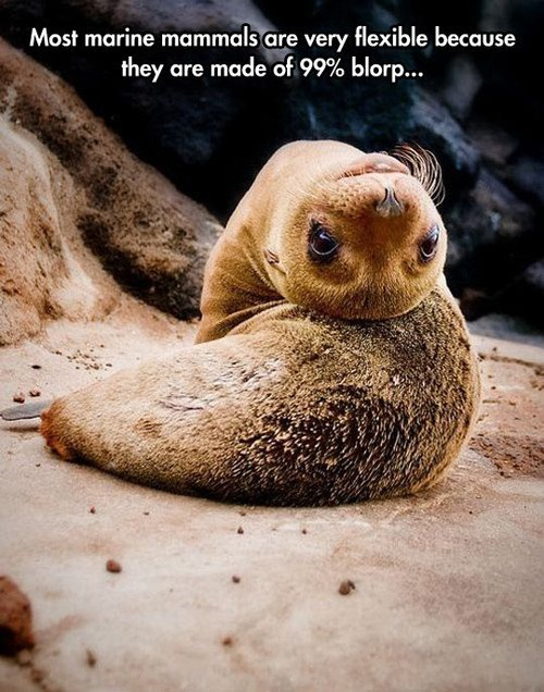 seal,cute,sea creatures