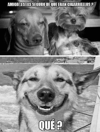 bromas perros Memes animales - 8193184256