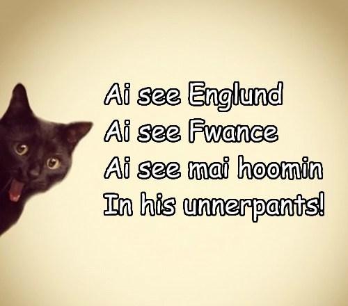Cats,underwear