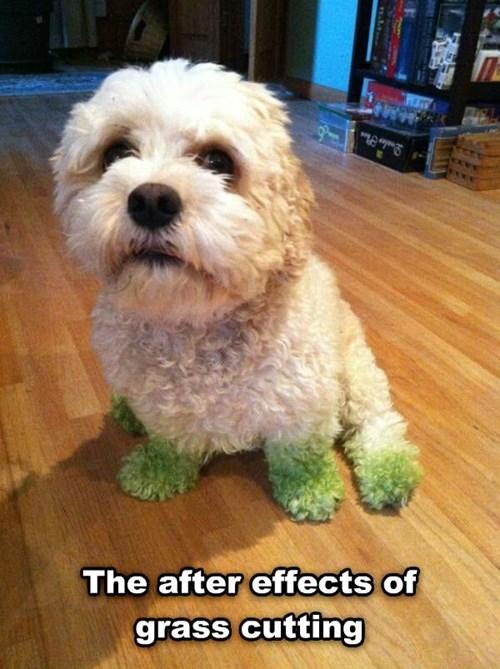 green lawn grass - 8193197312