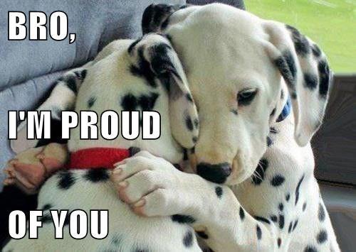 puppies pride dalmatians - 8193242624