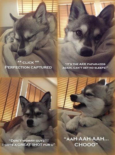 dogs,selfie