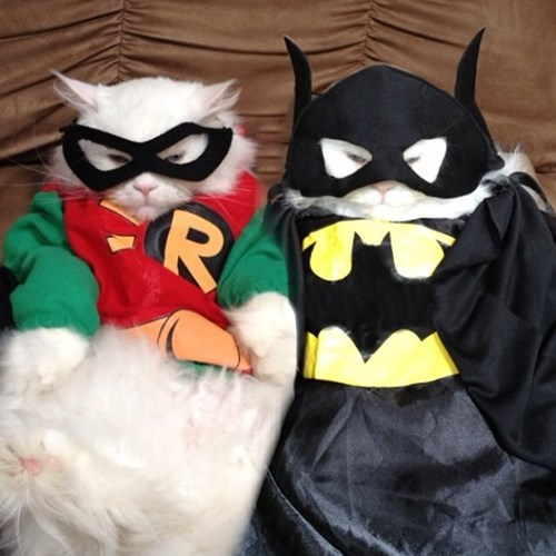 costume,poorly dressed,robin,superheroes,batman,Cats,g rated