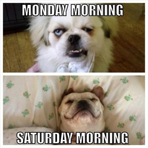 monday thru friday dogs saturday tired mondays sleeping - 8193360896