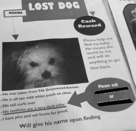dogs,lost and found,Oversharing