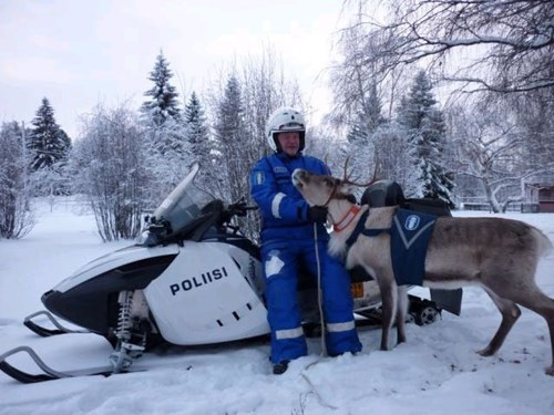 reindeer pets Finland cute - 8193634560