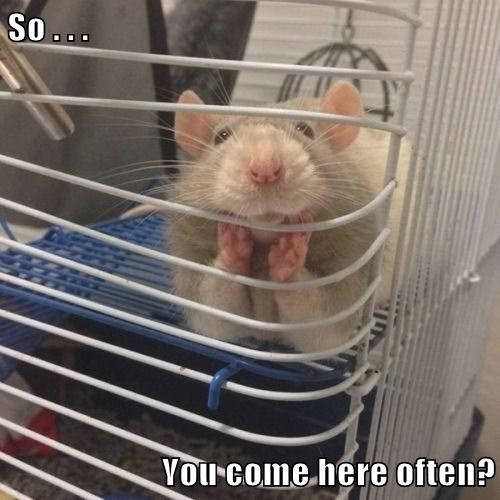 pick-up lines mice mouse - 8193711104
