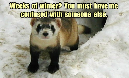 Weeks of winter? You must have me confused with someone else.