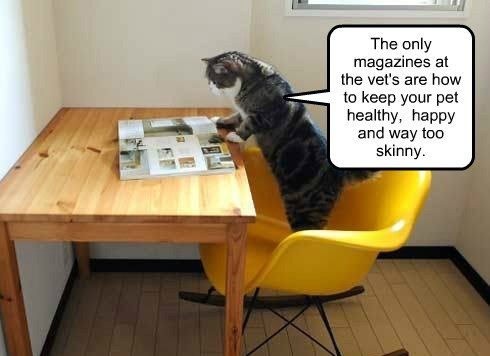 The only magazines at the vet's are how to keep your pet healthy, happy and way too skinny.