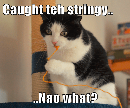 Caught teh stringy..  ..Nao what?