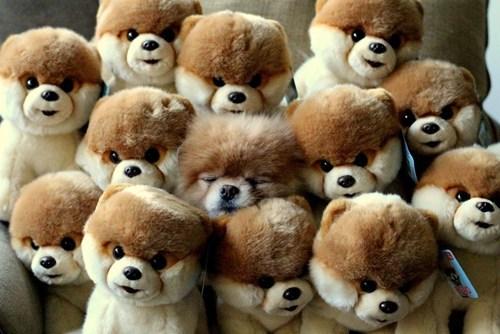 dogs stuffed animals puppy - 8194235392