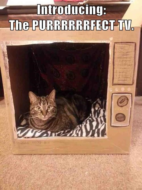 Introducing: The PURRRRRRFECT TV.