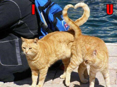 hearts tails Cats - 8194356480