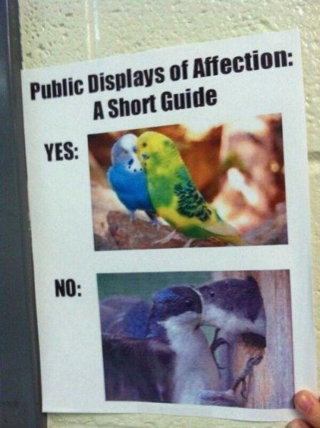 sign birds PDA - 8194368768