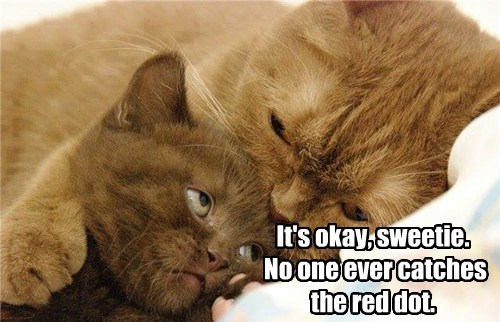cat,red dot,kitten