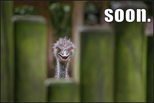 birds funny ostrich SOON - 8194441472