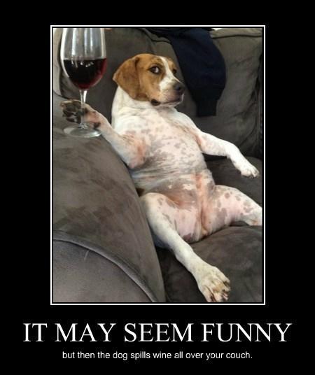 dogs wine jerks funny - 8194541312