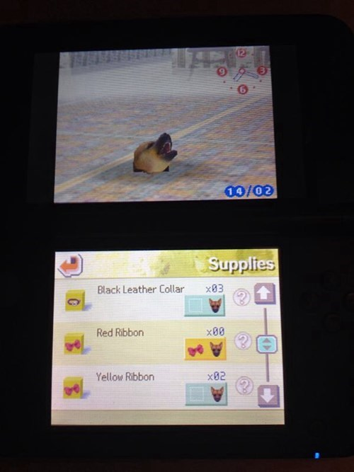 wtf glitches Nintendogs - 8194596352