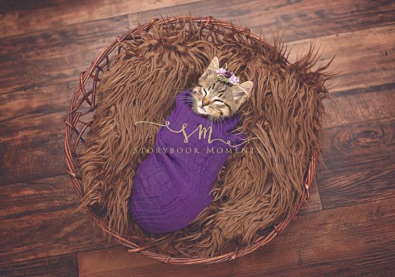 baby photography kitten photoshoot newborn Cats - 819461