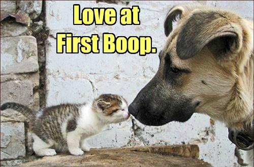 cute dogs kitten love - 8194652928