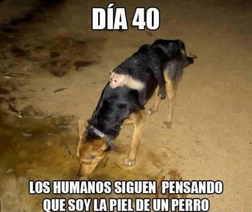 bromas perros Memes animales - 8194779904